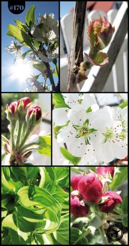 Frühlings-Spitzchen